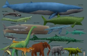 draft_megafauna_chart_by_harry_the_fox-d2m5tpa
