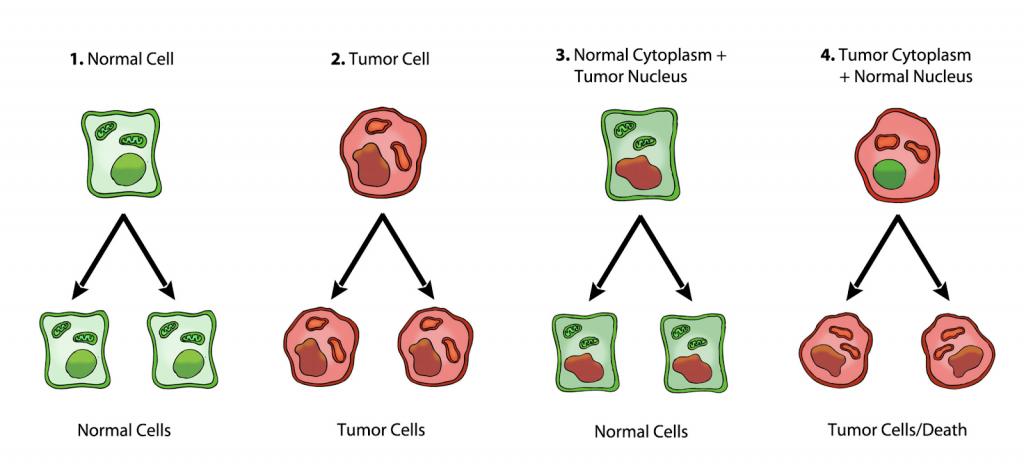 cancer is genetic disease)